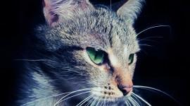4K Kittens Wallpaper Free#1
