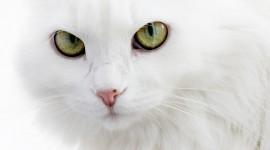4K Kittens Wallpaper Full HD#3