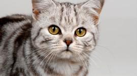 4K Kittens Wallpaper Full HD#4