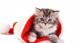 4K Kittens Wallpaper Gallery