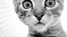4K Kittens Wallpaper Gallery#3