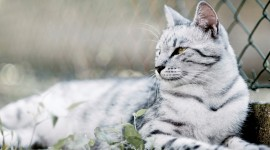 4K Kittens Wallpaper Gallery#4