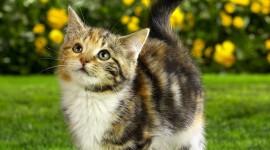 4K Kittens Wallpaper HQ