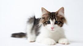4K Kittens Wallpaper#1