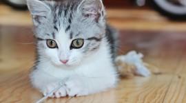 4K Kittens Wallpaper#2