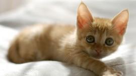 4K Kittens Wallpaper#3