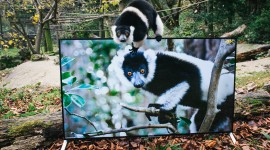 4K Lemur Desktop Wallpaper HD