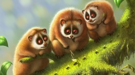 4K Lemur Image