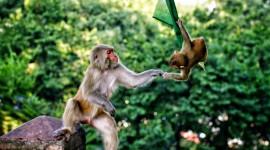 4K Monkey Photo