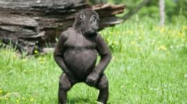 4K Monkey Photo Download