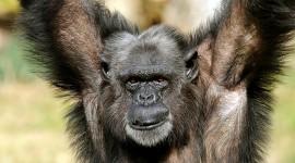 4K Monkey Photo Free