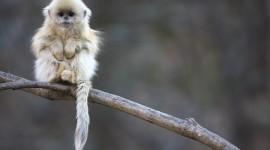4K Monkey Photo#1