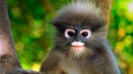 4K Monkey Wallpaper