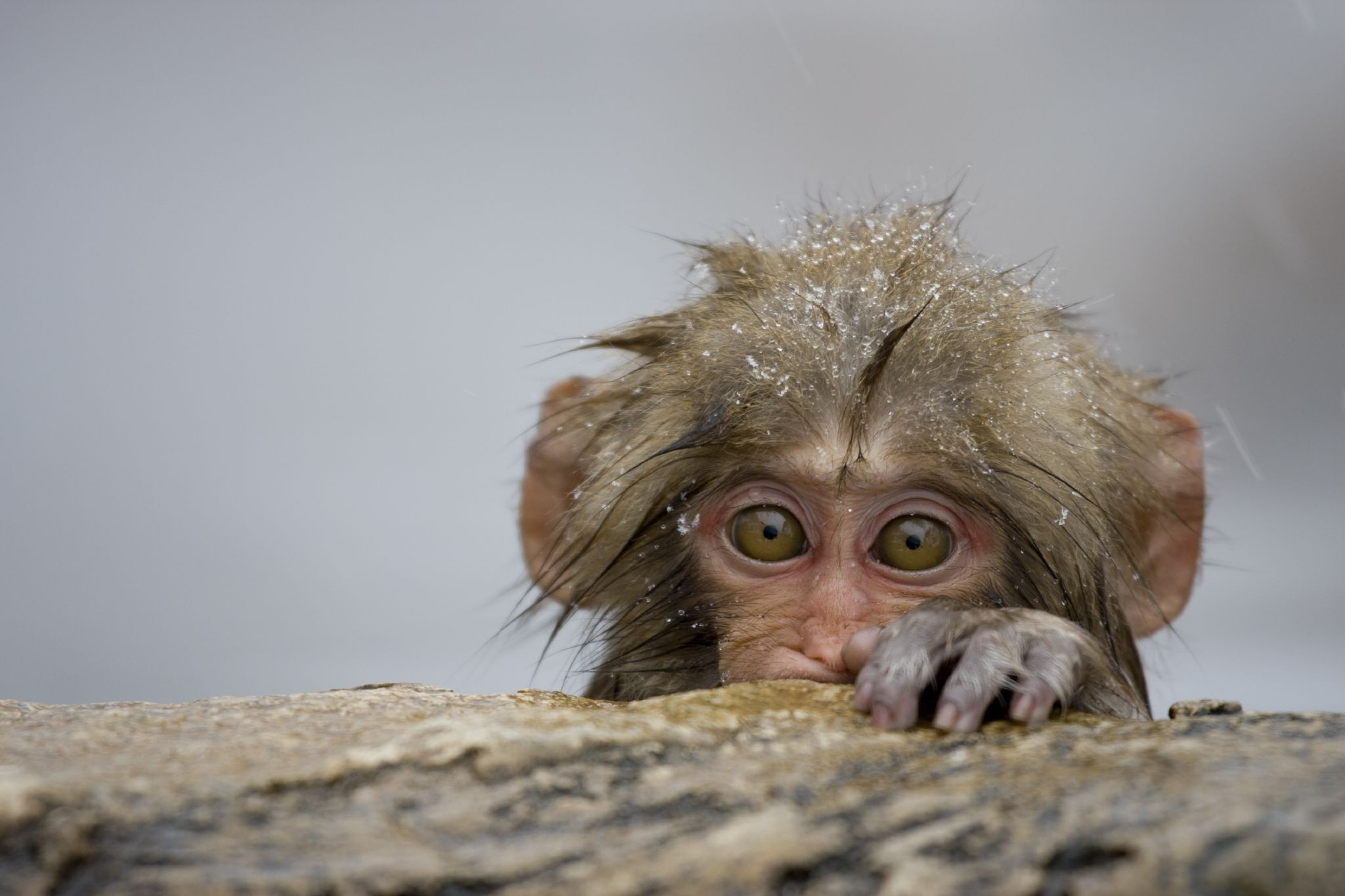 4k monkey wallpapers high quality download free