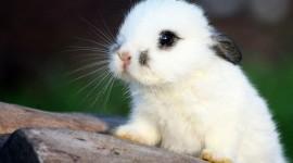 4K Rabbits Best Wallpaper