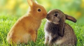 4K Rabbits Desktop Wallpaper