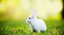 4K Rabbits Desktop Wallpaper For PC