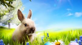 4K Rabbits Desktop Wallpaper HD
