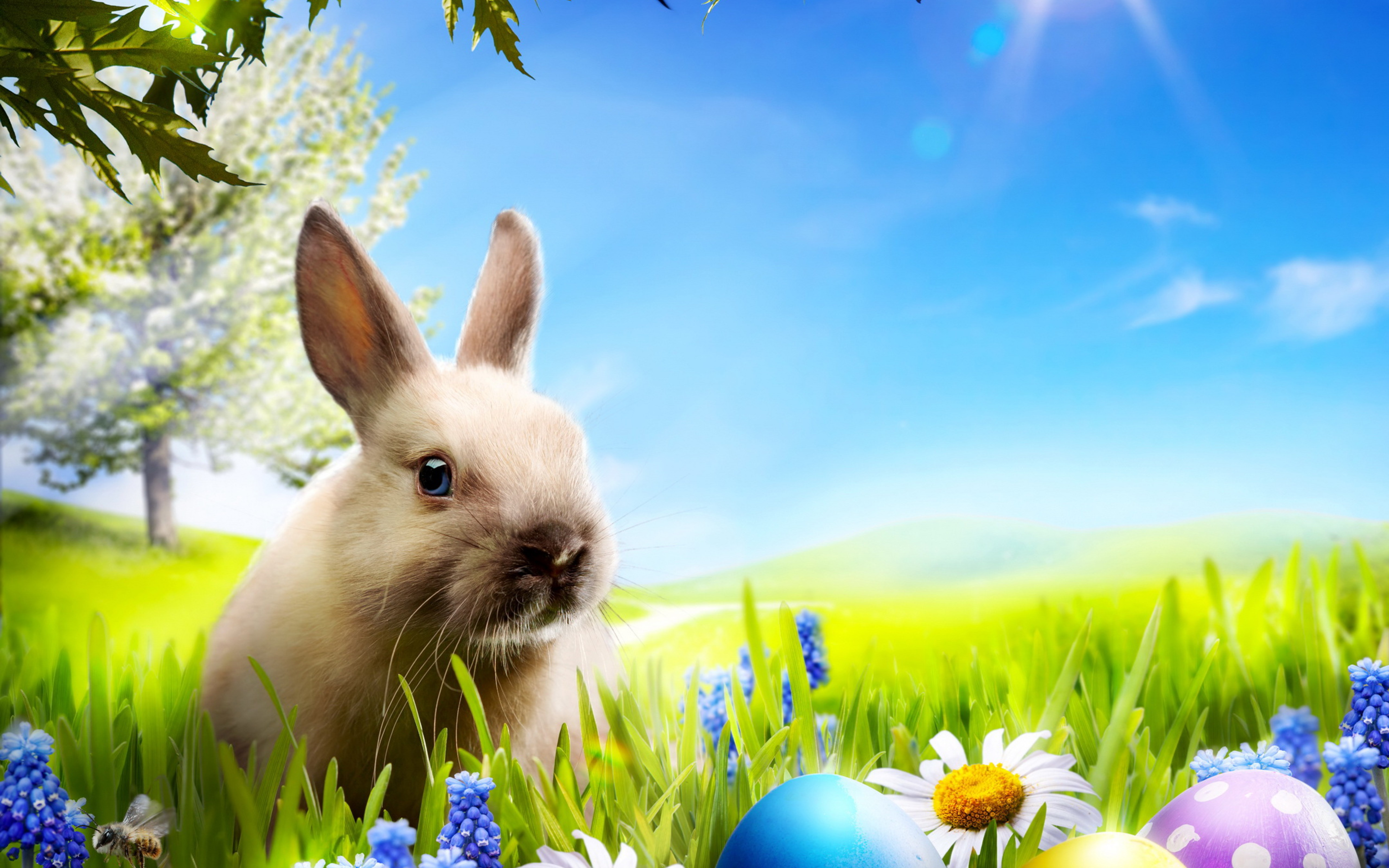 4k rabbits wallpapers high quality download free - Lustige wallpaper ...