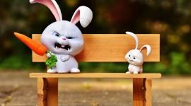 4K Rabbits Image