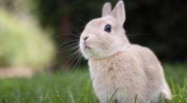 4K Rabbits Photo