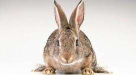 4K Rabbits Photo Download