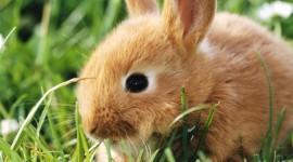 4K Rabbits Photo#1