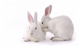 4K Rabbits Pics