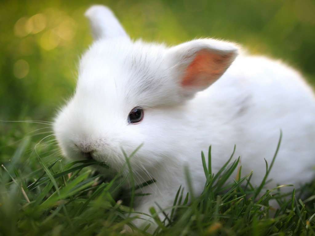 4k Rabbits Wallpapers High Quality Download Free
