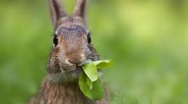 4K Rabbits Wallpaper 1080p