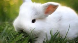 4K Rabbits Wallpaper