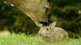 4K Rabbits Wallpaper Background