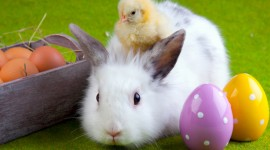 4K Rabbits Wallpaper Download