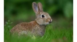 4K Rabbits Wallpaper Download Free