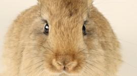 4K Rabbits Wallpaper For Desktop
