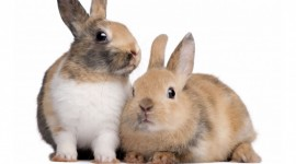 4K Rabbits Wallpaper For PC