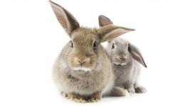 4K Rabbits Wallpaper Full HD