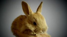 4K Rabbits Wallpaper Gallery