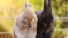 4K Rabbits Wallpaper HQ