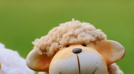 4K Sheep Wallpaper For IPhone