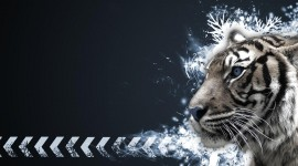 4K Tigris Desktop Wallpaper For PC