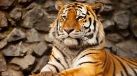 4K Tigris Photo