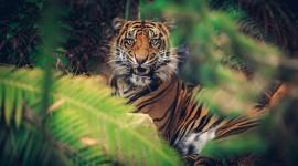 4K Tigris Photo#2