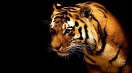 4K Tigris Photo#3