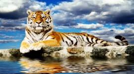 4K Tigris Wallpaper Download Free