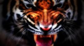 4K Tigris Wallpaper#3