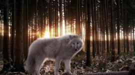 4K Wolves Wallpaper Background