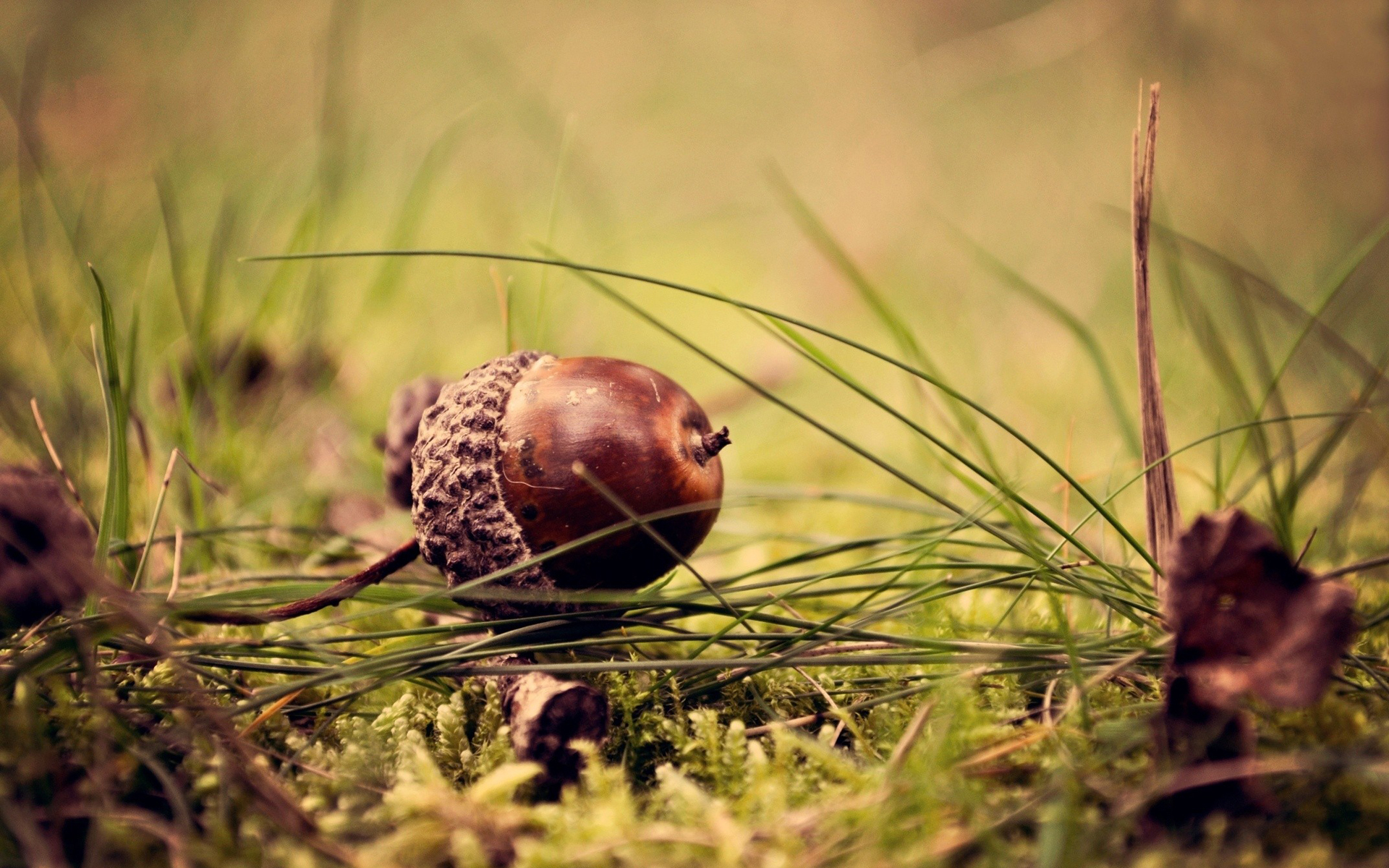 Acorns Wallpapers High Quality Download Free