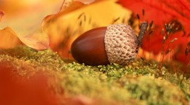 Acorns Wallpaper Download