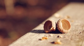 Acorns Wallpaper Full HD
